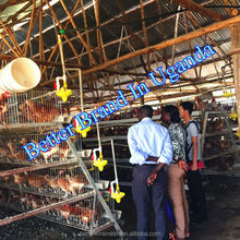 BETTER Factory Hot-sale new design chicken layer poultry cage for Kenya Farm(Factory price)