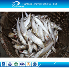 Seafood Export Frozen Marinated Anchovy Fillets
