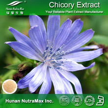 High Quality Chicory Root Extract Inulin 90% 95%
