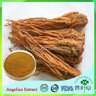100% Natural herb extract angelica sinensis extract dong quai extract
