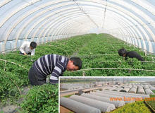 agriculture nonwoven faric cover used for the vegetable and fruits/nonwoven flower protection bag