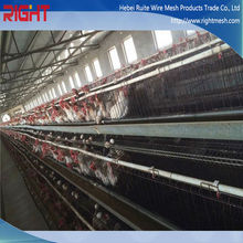 Chicken Cage for growing broilers and pullets,chicken cage