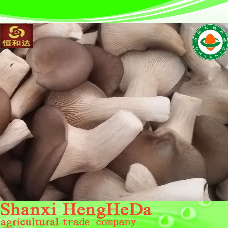 originality Popular mushroom grow bags substrate