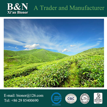 factory hot sales green leaf tea extract Exported to Worldwide