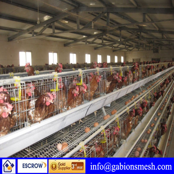 ISO9001:2008 high quality/low price design layer chicken cages for kenya poultry farm