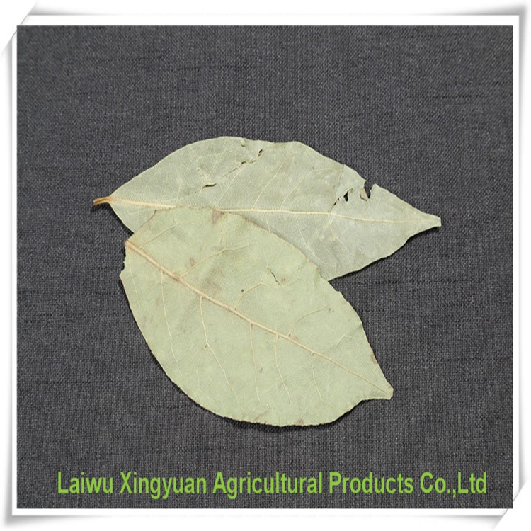 Natural non-pollution bay leaf for sale