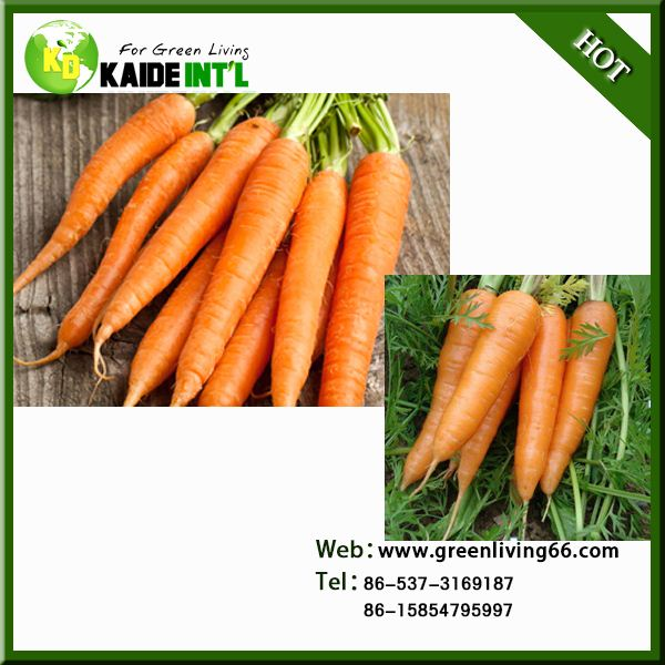 Special Supply Bulk Carrot