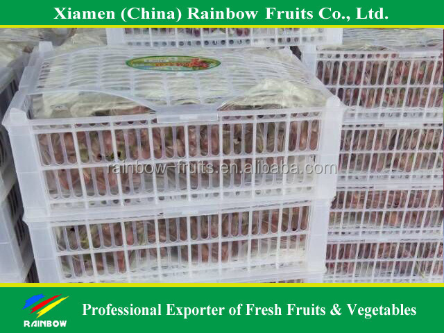 fresh Red Sweet seeded grape fruit export from China