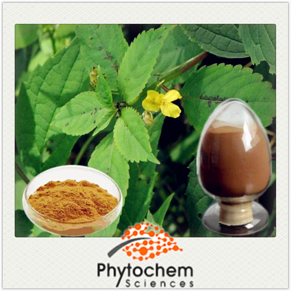 Healthcare producs additives Nettle PE 1% Organic Silica