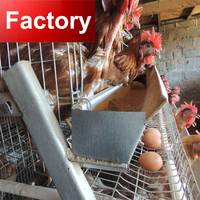 Factory Stainless steel nipple drinker one old day broiler chicks rearing cage