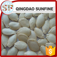 New crop snow white pumpkin seeds shine skin pumpkin seeds price