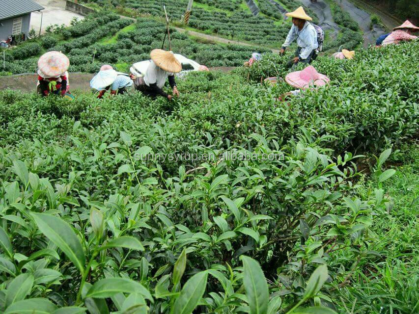 Assam black tea price low for bubble tea