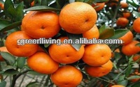 fresh fruits / baby mandarin orange /sweet