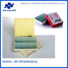 three types of bacteria smear microbiology prepared microscope slides set/meiosis microscope slides
