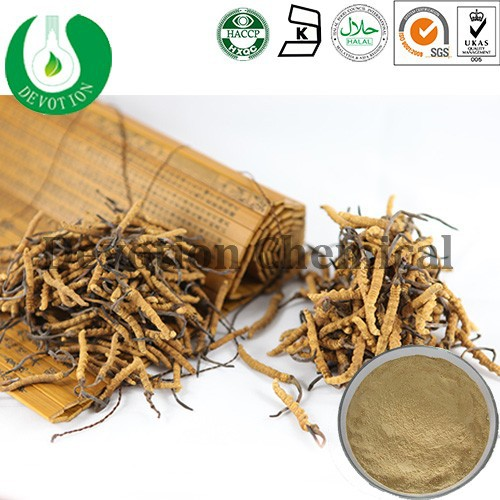 Health food/ sexual enhancement medicine/Chinese special herb/Cordyceps Sinensis Extract- Cordycepin