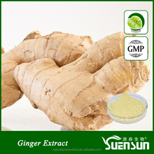 High specification ginger root extract gingerol powder 5%-20%