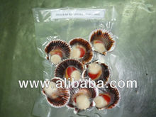 FROZEN SCALLOPS - HALF SHELL