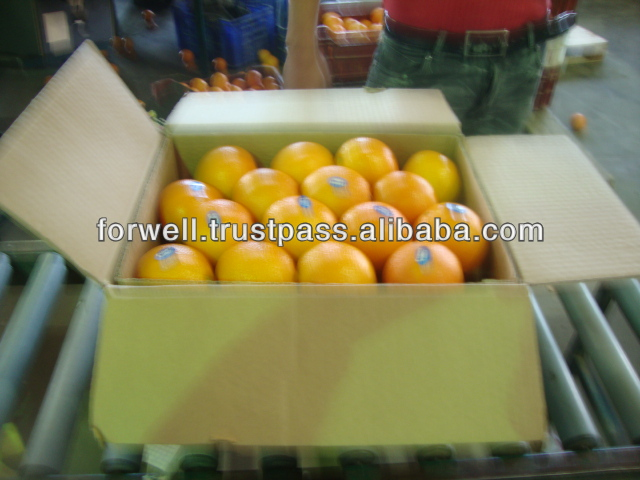 SUPER QUALITY Egyptian FRESH NAVAL ORANGE ( 44/48/56/64/72/80/88/100/105/113/125 )