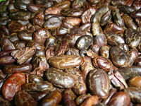 SUPER PREMIUM QUALITY COCOA BEAN FOR EXPORT