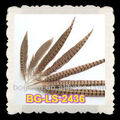 Natural Pheasant Tail Feather