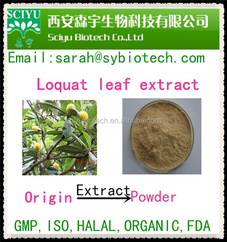Wholesales price for Loquat leaf extract/Loquat extract/ ursolic acid 25-45%