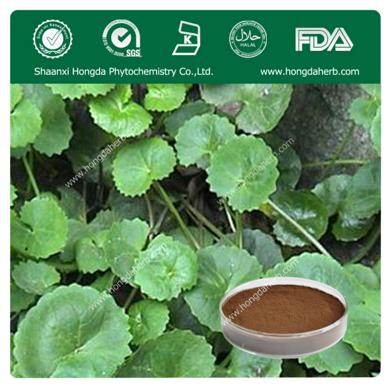 Best Quality Gotu Kola Herb Powder Extract---centella asiatica/gotu kola extract