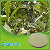 best selling products loquat leaf extract