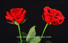 Promotional glass tube with love rose By Chinese Supplier