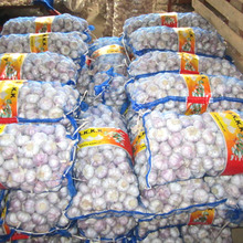 Wholesale Fresh Organic White Japanese Garlic