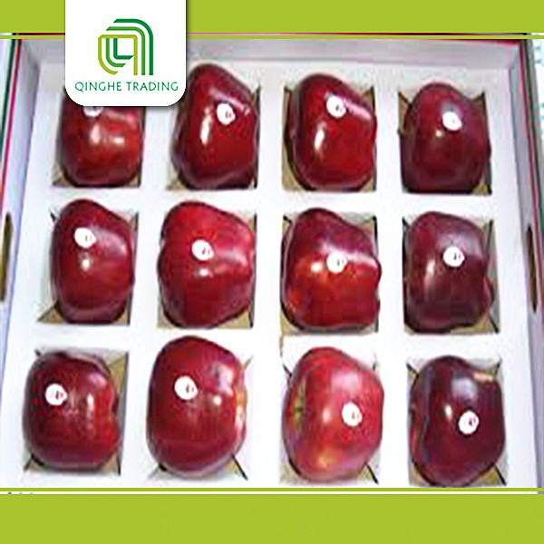 farm top red huaniu apples chinese fruit with low price