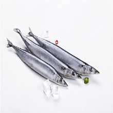 Wholesale Good Price Frozen Pacific Saury