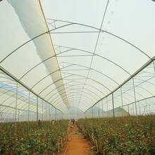 Multi span plastic film gutter connected greenhouse