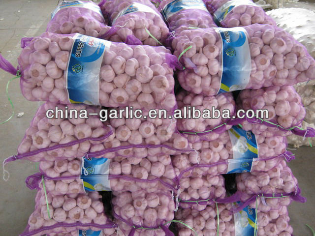 Fresh Normal White Purple White garlic price in China