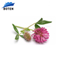 Natural Biochanin Red Clover Powder Extract 98%