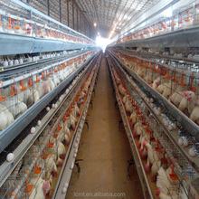 Durable breeding special poultry chicken cages for sale