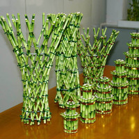 Natural Plants lucky bamboo vases wholesale