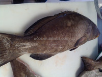 frozen seafood giant grouper fish for sale