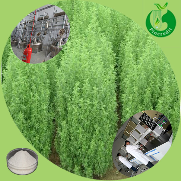 GMP quality artemisia tested by HPLC in stock artemisinin 99% powder