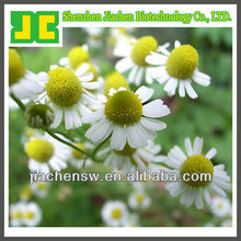 Sell 100% Natural chamomile flowers P.E.