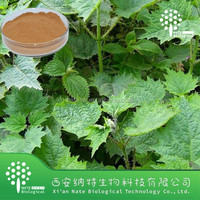 Top quality Nettle leaf powder - Nettle extract for healthy food