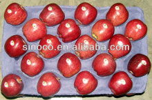 Red delicious apple de vente