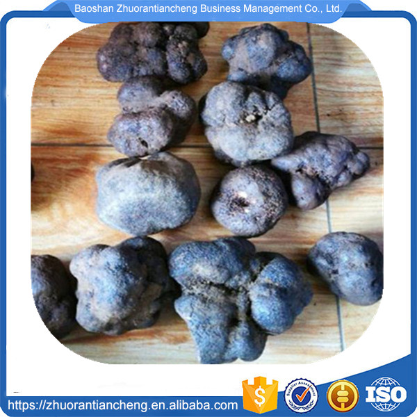 Truffle and Wild Raw Material Dried Black Truffle for sale with best price