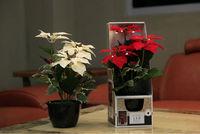 Flora Bunda Artificial flower with led light | silk flower with led light | potted artificial flower with led light