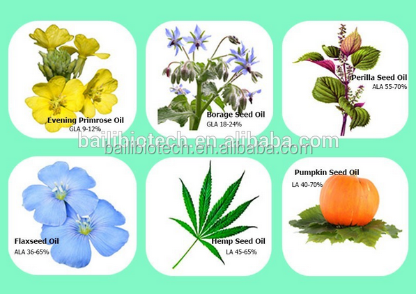 Medical use Hemp Seed Oil favorable price