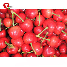TTN bulk cheap wholesale organic import freeze dried cherry prices
