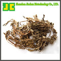 Natural Motherwort Extract