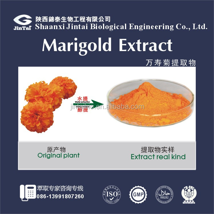 Natural marigold flower extract lutein powder or oil