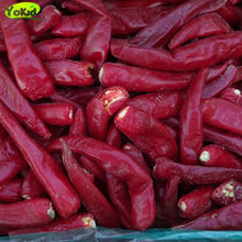 Agricultural Products Good Taste IQF Frozen fresh red chili