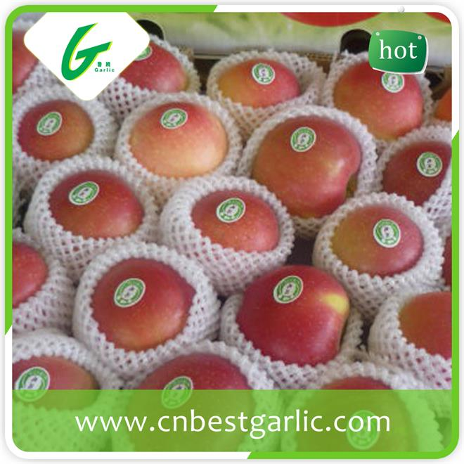 Fresh Chinese red gala apples wholesales