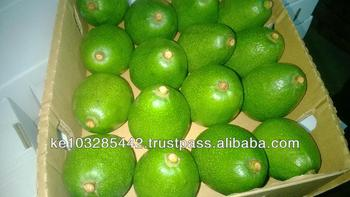 High quality fresh Kenyan Fuerte and Hass Avocado Class 1,handpicked and packed